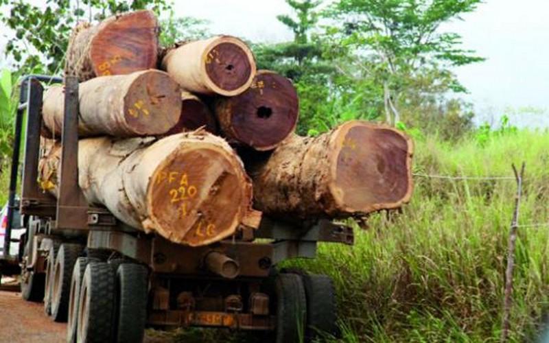 Exportation de 300.000 tonnes de bois de la Gambie vers la Chine: le ministère sénégalais de l'Environnement s'explique