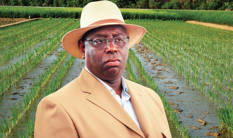 Macky va encore injecter 20 milliards Fcfa dans l'agriculture pour une autosuffisance en riz après le Covid-19