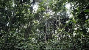 «L'Union européenne réduit son soutien au WWF, accusé de bafouer les droits des Pygmées au Congo»