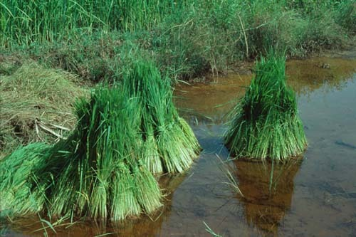Jean-Claude Mimran peut investir dans la filière riz