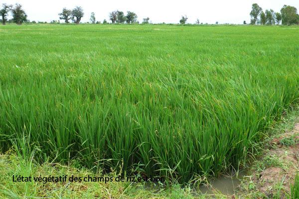 Perspective agricole au Sénégal : les inondations menacent les rendements