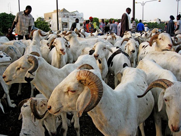 Tabaski 2020: le Gouverneur de Dakar définit les points de vente de moutons dans la capitale (Document)