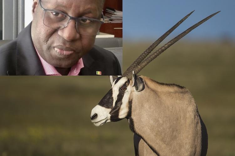 Scandale présumé de transfert meurtrier de Gazelles de Ranérou à Bambilor: les explications pas claires du ministère de l'Environnement