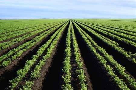 WASSADOU : la lutte des paysans, une lutte de parachèvement de la libération nationale