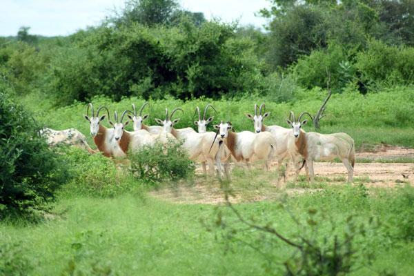 Réserve de faune du Ferlo: l'enclos de Katané, un paradis au cœur de Ranérou