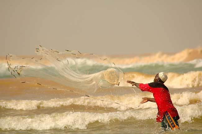 Pêche sénégalaise : Greenpeace rappelle au gouvernement ses responsabilités