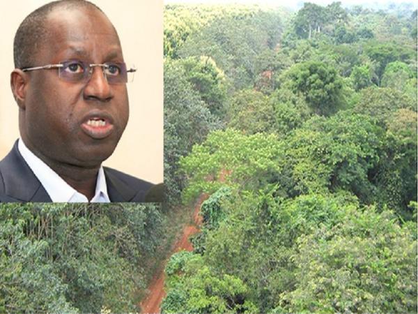 Forêt classée de Mbao : « l'Etat n'envisage pas de déclassifier un millimètre carré pour quelque besoin que ce soit» (ministre)