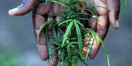 Etats-Unis: la dépénalisation de la marijuana dans deux Etats crée la confusion