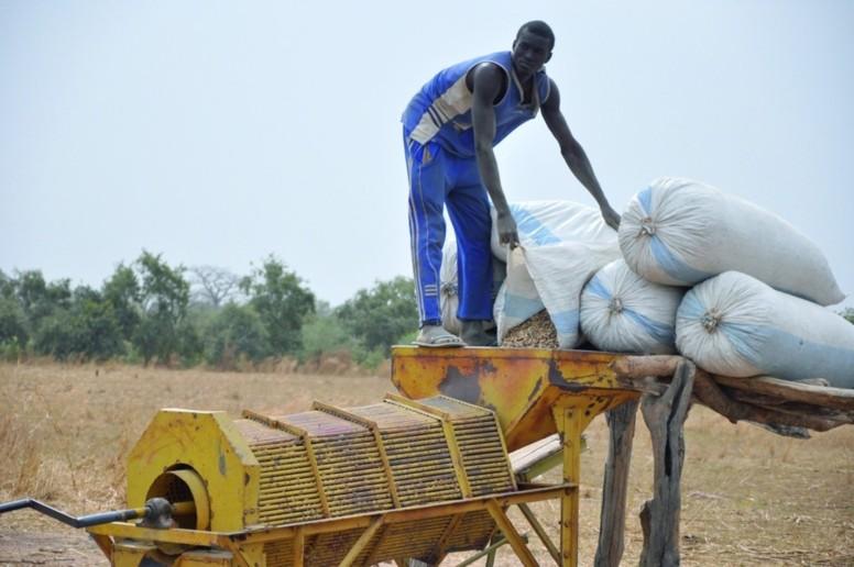 Agriculture: le prix au producteur fixé à 190 Fcfa le Kg