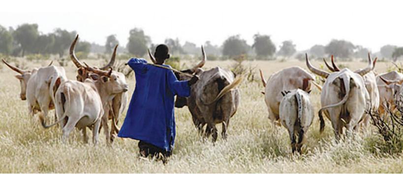Le Sérère et la lutte traditionnelle: le legs du berger