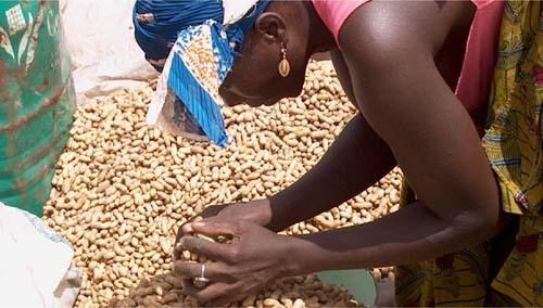 Commercialisation de l'arachide : Tek Tegui pour la fin des bons impayés