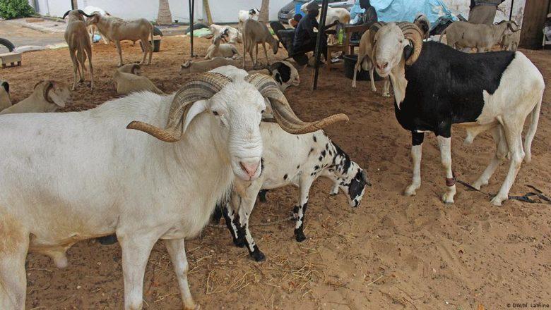 Fass Mbao: un vendeur de moutons de race agressé et dépouillé de son argent