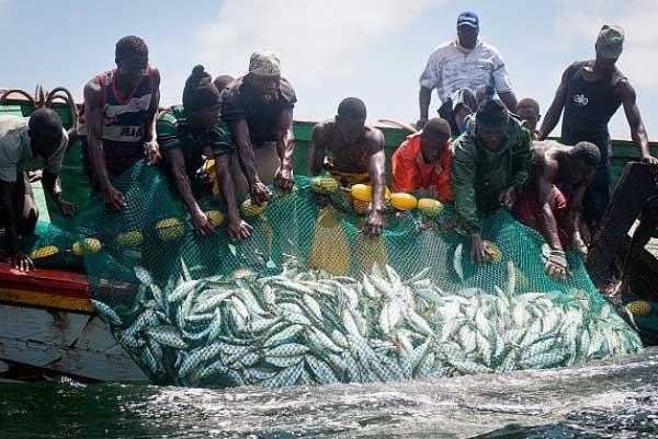 """Journée mondiale de la pêche : Greenpeace appelle à une """"gestion transparente"""" des ressources halieutiques au Sénégal"""