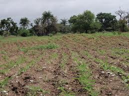 Agriculture : « Les chasseurs de terres fertiles », un danger pour l'agriculture paysanne sénégalaise