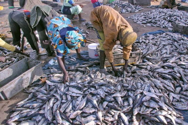 Les défenseurs de la mer accusent le Gaipes de se sucrer sur le dos des sénégalais avec la complicité de Greenpeace Sénégal