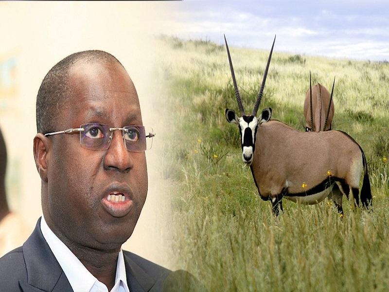 Affaire des Gazelles Oryx: Abdou Karim Sall met fin au débat devant les députés