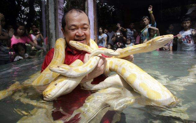 L'homme qui vivait avec des pythons