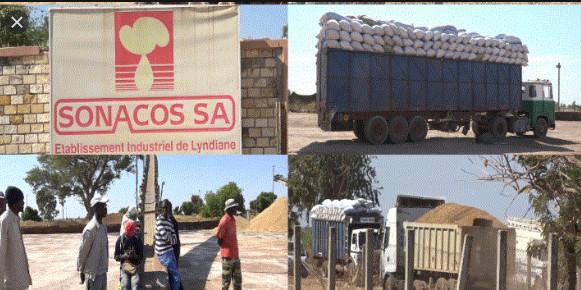 Commercialisation de l'arachide: Macky Sall vole au secours de la Sonacos et des autres huiliers