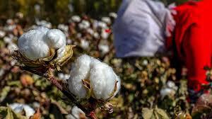 Un rapport dénonce le travail forcé en Chine d'un demi-million d'Ouïghours dans le coton