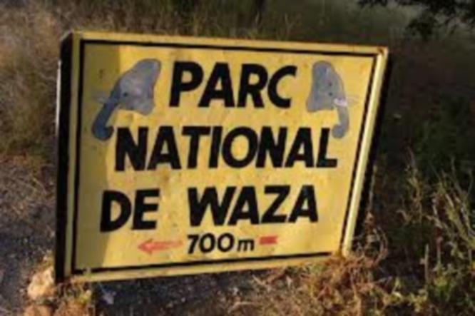 Les 7 otages français enlevés au Cameroun seraient libres