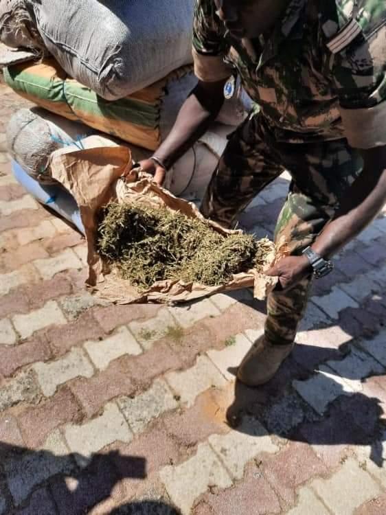 Fatick: 263 kg de chanvre indien saisis au quai de Sibassor