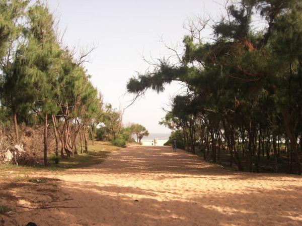 Rufisque – Construction de cité : Domaine forestier de l'Etat à Déni Guedj touché de plein fouet