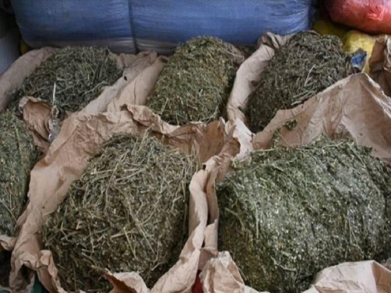 """Saisie de drogue à Grand Yoff : quatre (4) """"trafiquants"""" dont une fille arrêtés"""
