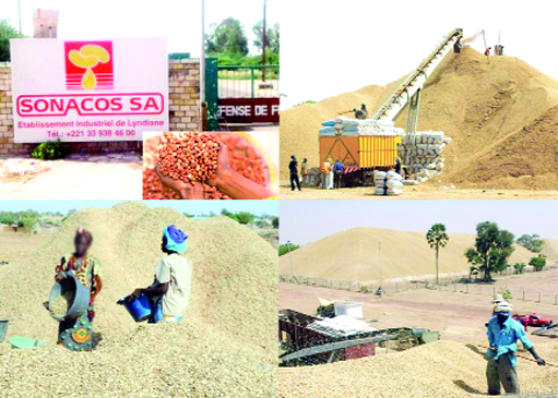 """Vente """"illégale"""" de graines à l'étrangers: les producteurs du Bassin arachidier réclament des milliards à la Sonacos"""