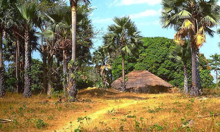 Casamance : Des éléments armés  enlèvent 12  démineurs