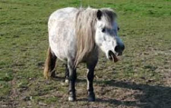 Rhinopneumonie en France : les chevaux confinés à leur tour en raison d'une forme équine de Covid