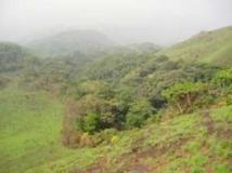 Scandale écologique en Guinée-Bissau