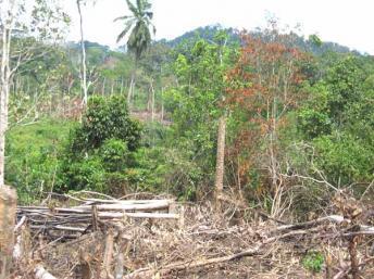Lutte commune de la Côte d'Ivoire et de l'UE contre l'exploitation illégale des forêts