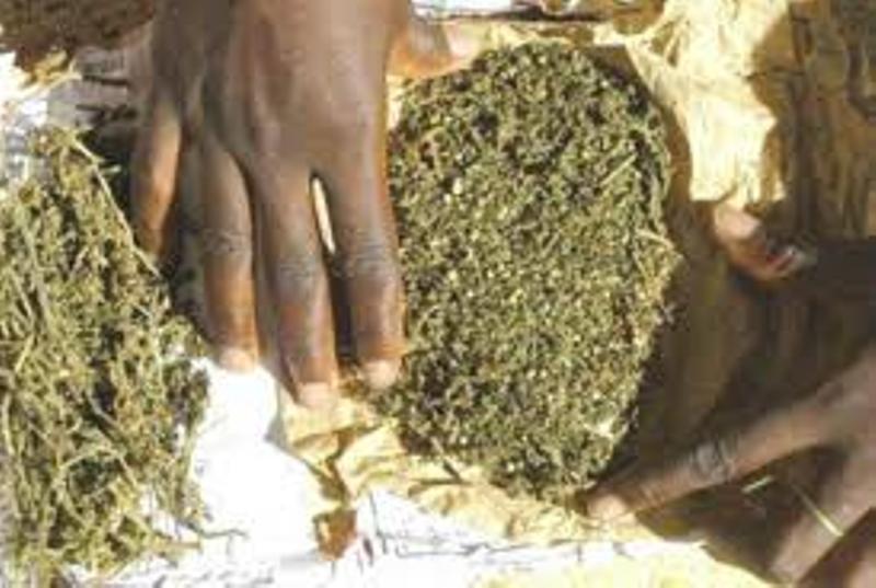 Trafic de drogue: un jeune arrêté avec 02 kg de « yamba »