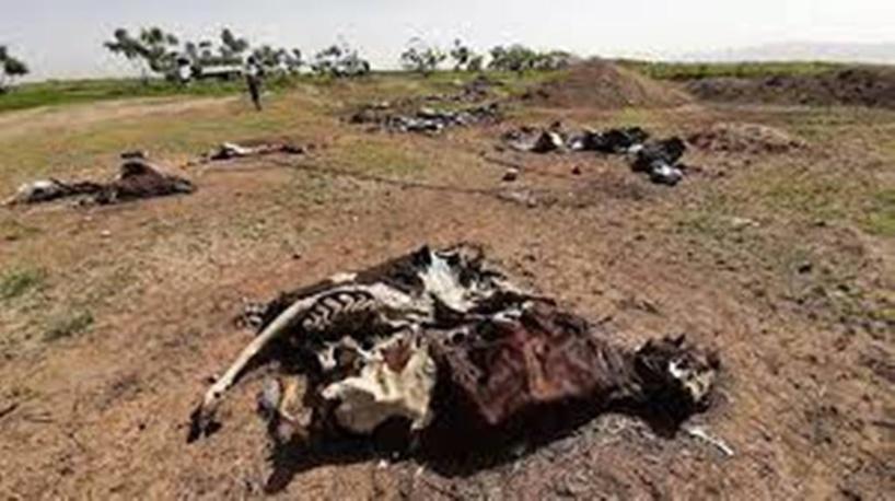 Éthiopie: au Tigré, le désarroi des habitants de Mekoni après la destruction de l'entreprise agricole