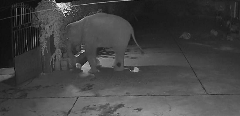 Chine: des éléphants en excursion traversent les villes et pillent les récoltes
