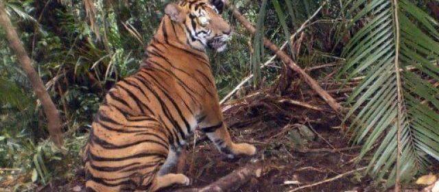 Cinq Indonésiens ont pu enfin descendre lundi d'un arbre où ils étaient réfugiés depuis quatre jours sous la menace de tigres qui avaient déjà dévoré un de leurs compagnons, a-t-on appris de source policière.