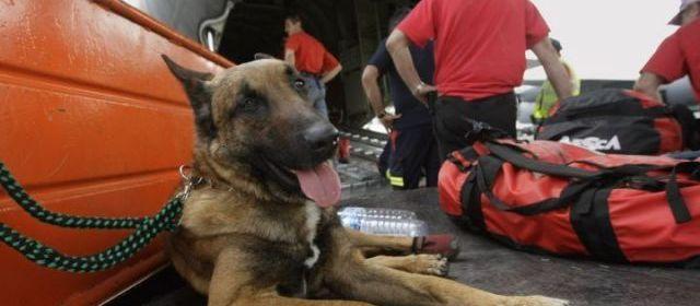 Illustration. Des gangs sud-américains basés à Milan utilisaient des chiens pour transporter de la cocaïne du Mexique en Italie sans se faire repérer.   AFP/Joseph Eid