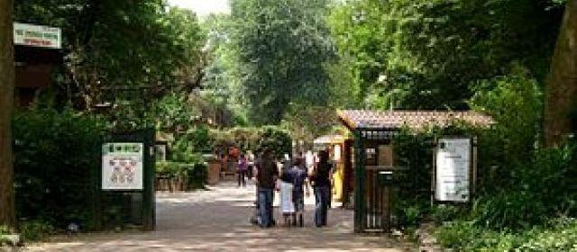 Six animateurs du centre de loisirs municipal d'Haverskerque (Nord) ont oublié un enfant de 3 ans au zoo de Lille. L'enfant a été retrouvé sain et sauf par une visiteuse. | Capture d'écran