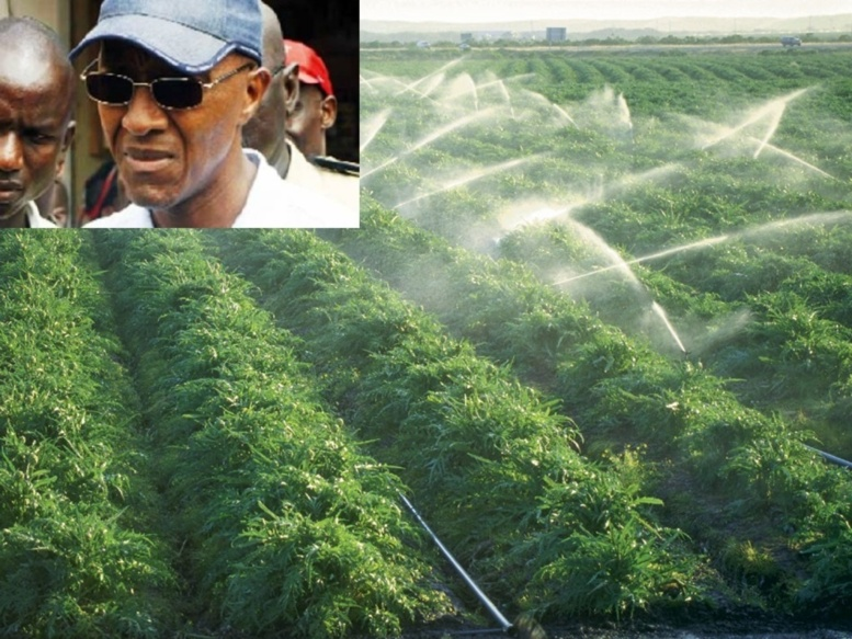 Agriculture, moteur de développement : Le partenariat public-privé institutionnalisé comme atout majeur