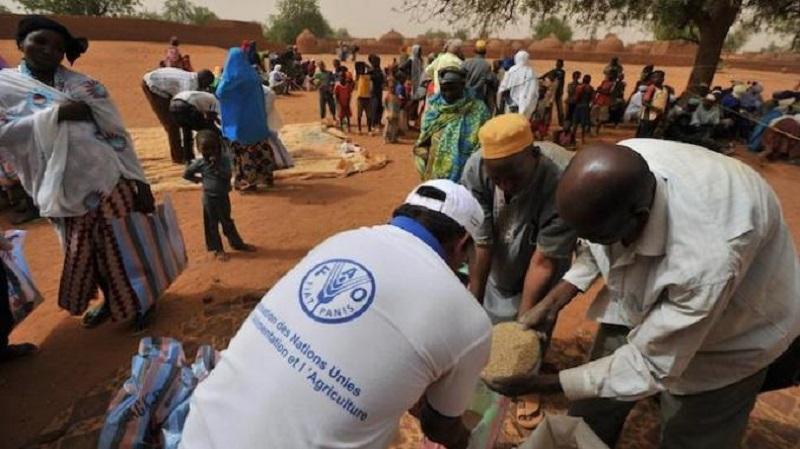 Insécurité alimentaire: le Pam au secours du gouvernement dans le Fouta