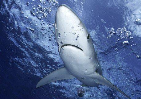 Hawaï : une touriste se fait arracher le bras par un requin