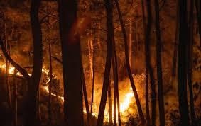 Turquie: rumeurs et fake news se multiplient sur les feux de forêts meurtriers