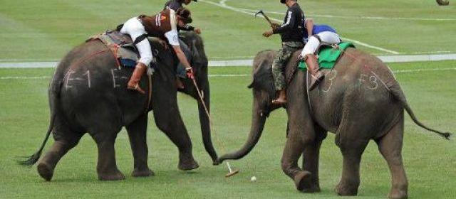 Jouer au polo en Thaïlande, oui, mais à dos d'éléphants