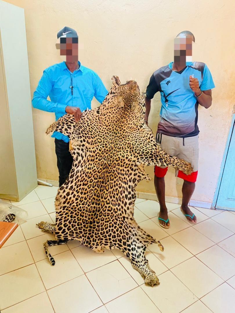 Trafiquants de faune à Kédougou: 4 individus arrêtés