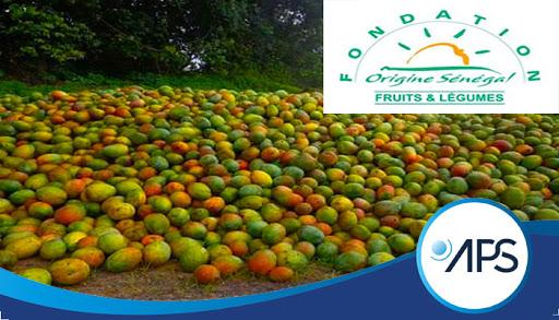 La Mangue sénégalaise, un trésor inexploité à Sangalkam