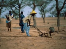 La réforme de l'agriculture sera l'une des priorités du nouveau gouvernement Touré. Yves Paris/ IRD