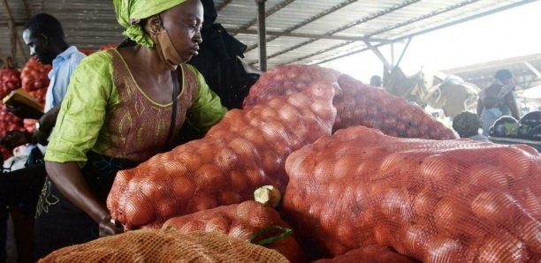 Trop d'oignons fait pleurer les producteurs sénégalais