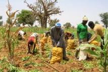 Perspectives agricoles et alimentaires 2013-2014 au Sahel et en Afrique de l'Ouest : la situation du marché