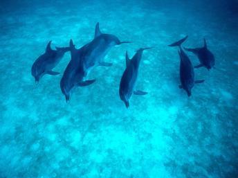 Madagascar : un échouage massif de dauphins lié à un sonar d'ExxonMobil