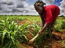 La question de l'accaparement des terres est une question cruciale au Mali. Getty Images/WIN-Initiative
